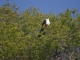 african-fish-eagle_0