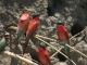 carmine-bee-eaters