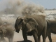 elephant-dust-bath