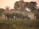 elephant-sunset-dustbath