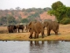 elephants-chobe