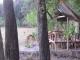 impalas-in-kwara-camp