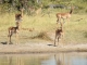 inquisitive-impala