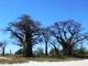 kalahari-baines-baobabs