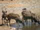 kudu-etosha