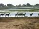 kudu-family