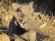 male-warthog