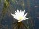 okavango-delta-reflections_0