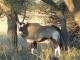 oryx-nxai-pan