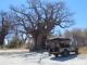 picnic-baines-baobab