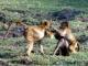 playful-baboon-babies
