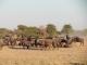 wildebeest-nxai-pan_0