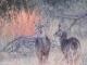 young-waterbuck-kwara
