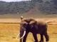 elephant-ngorongoro-crater