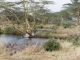 serengeti-waterhole