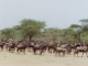 wildebeest-migration-serengeti