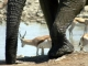 big-and-small-etosha-waterhole