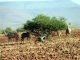 browsing-kudu-damaraland
