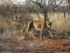 cheetah-conservation-centre_0