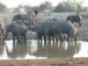 elephant-sundowners