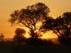 a-spectacular-african-sunrise