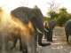 elephants-chobe-national-park