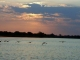 sunset-zambezi-river