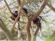 colobus-monkeys-arusha-park
