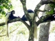 colobus-monkeys-arusha