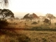 early-morning-mist-tarangire