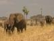 elephant-family-tarangire