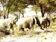 elephants-kilimanjaro