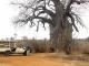 giant-baobab-tree-tarangire