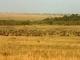 masai-mara-plains