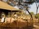 swala-camp-verandah