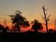 bush-sunset-south-luangwa