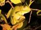 chameleon-in-spotlight