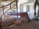 chongwe-house-bar