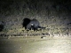 civet-sighting-night-game-drive