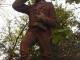david-livingstone-statue