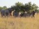 elephant-family-feeding