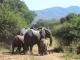 elephant-family_0