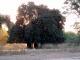 kudu-browsed-treeline