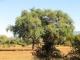 lower-zambezi-landscape