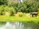 nkwali-lagoon