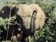 elephant-appraisal