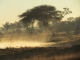 morning-mist-hwange-park_0