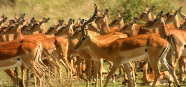 9 days 8 nights kenya road safari - Impala club nairobi swimming pool ...