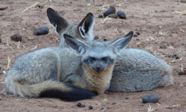 East Africa Road Safari Header 2